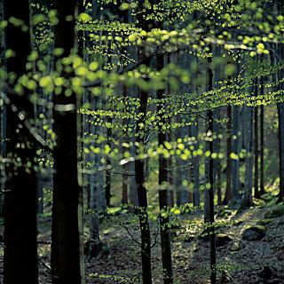 Die ECOVERO™ by LENZING™ Fasern werden aus Holz gewonnen