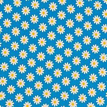 blueday daisy