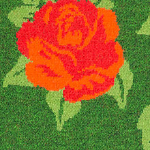 tempting roses